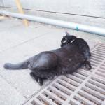 「東池袋中央公園」の天真爛漫な黒猫さん