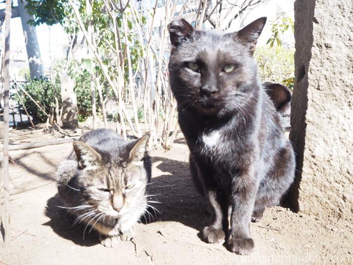 キジトラ猫さんと黒猫さん