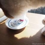 須崎動物病院のサプリメント「乳酸菌パウダー」が大好きな猫