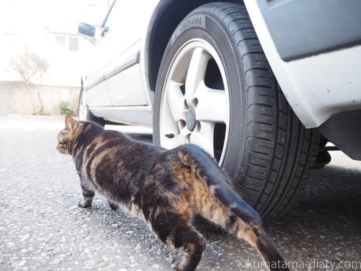 伸びをするキジトラ猫さん