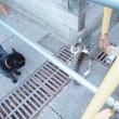 キジトラ白猫さんvs.黒猫さん