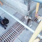 【東池袋中央公園】観光客もビックリ!三毛猫さんvs.黒猫さんのケンカ
