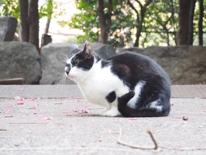 黒白猫さん