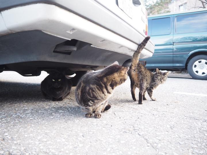 挨拶するキジトラ猫さん