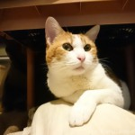 BSジャパンのドラマ「猫とコワモテ2」に写真を提供しました