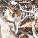 【大久保ねこ散歩】1時間で10匹の猫さんを見かけました