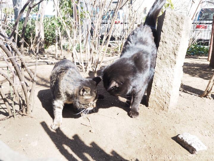 頭をこすりつける黒猫さん
