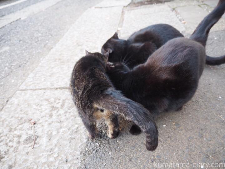 すりすりする猫さんたち