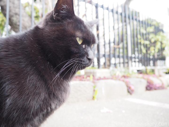 黒猫さん横顔