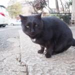 【文京区】食後でまったり&スリスリする白山神社の黒猫さんたち