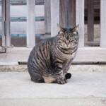 【文京区】「白山神社」の狛猫のようなキジトラ猫さんたち