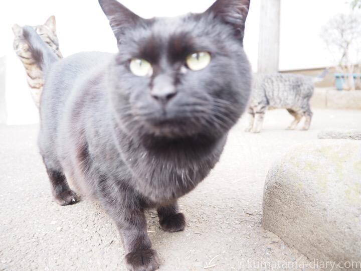 黒猫さんとキジトラ猫さんたち