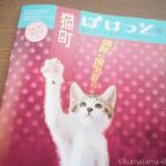 猫とアートの情報誌「猫町ぽけっと」が届きました