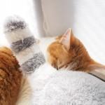 「3月のライオン でっかいブンちゃんぬいぐるみ」に埋もれて眠る猫