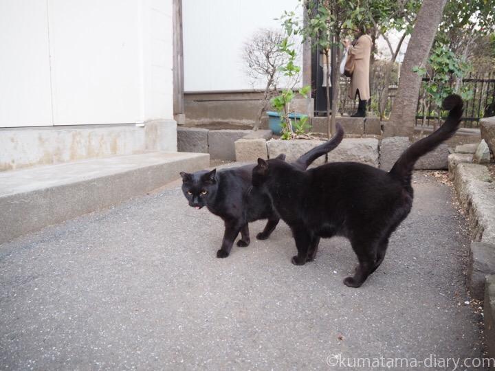 黒猫さん2匹