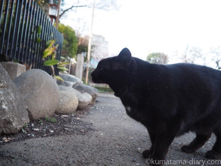 あくびする黒猫さん