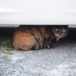 警戒して逃げていく猫さんは素晴らしい