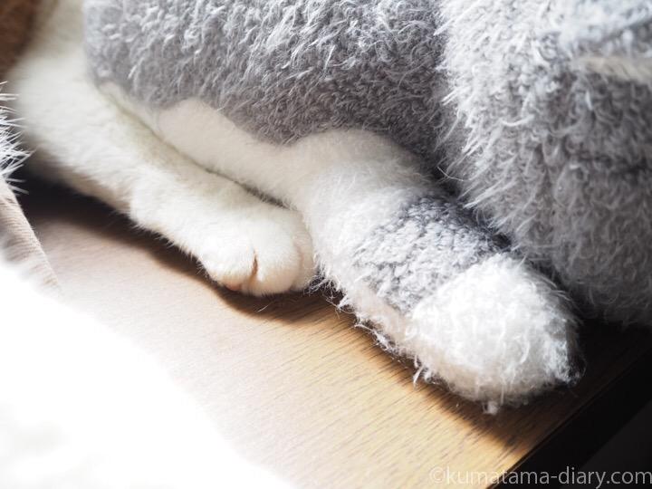 ブンちゃんとたまきの後ろ足