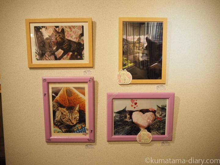 松本さんの写真