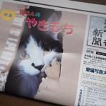 『月刊猫とも新聞』2018年4月号の特集は「猫さんのやきもち」です