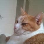 お風呂のフタの上で鎖骨に前足を置く猫