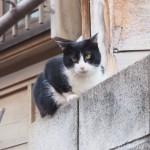 【文京区】「白山神社」で初めて見かけた猫さんたち