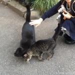 【文京区】「白山神社」の黒猫さんたちをなでなで♪