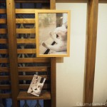 赤坂ジャローナ「我が家の自慢の猫たち写真展3」が無事終了しました