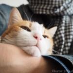 手首にあご乗せする猫