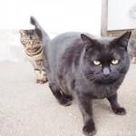 とってもマイペースな白山神社の黒猫さん