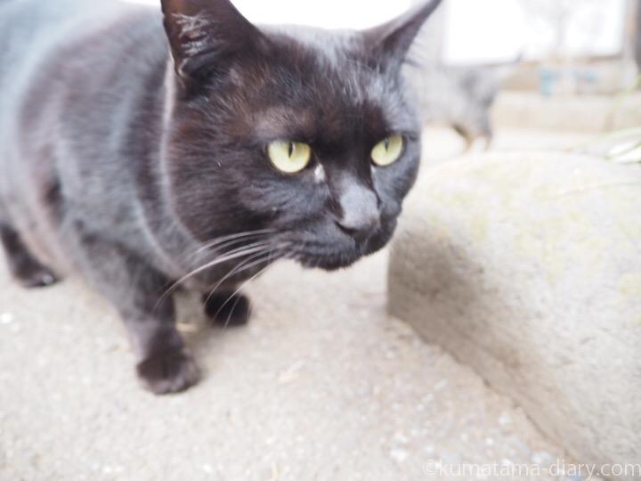 黒猫さんに接近