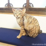 目黒雅叙園「福ねこat百段階段」展~和室で楽しむねこアート~で木彫り猫を見ました