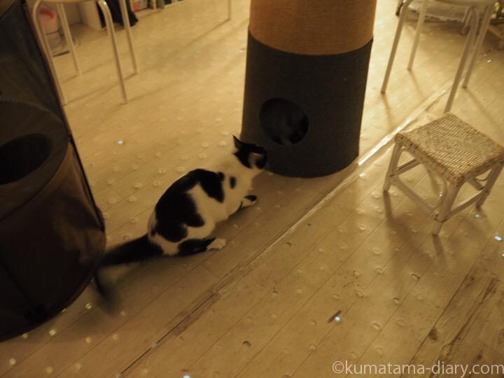 黒白猫さんケンカ中