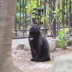 桜を見上げる「白山神社」の猫さんたち