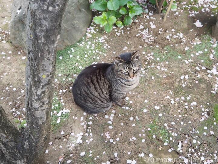 背中に花びらキジトラ猫さん