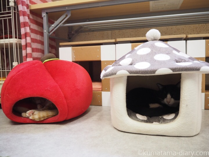 個室の猫さん