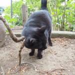 【文京区】木にスリスリする「白山神社」の黒猫さん