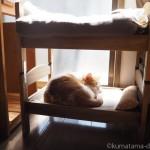 2段ベッドにしたIKEAの「DUKTIG 人形用ベッド」の下段で寝ていた猫