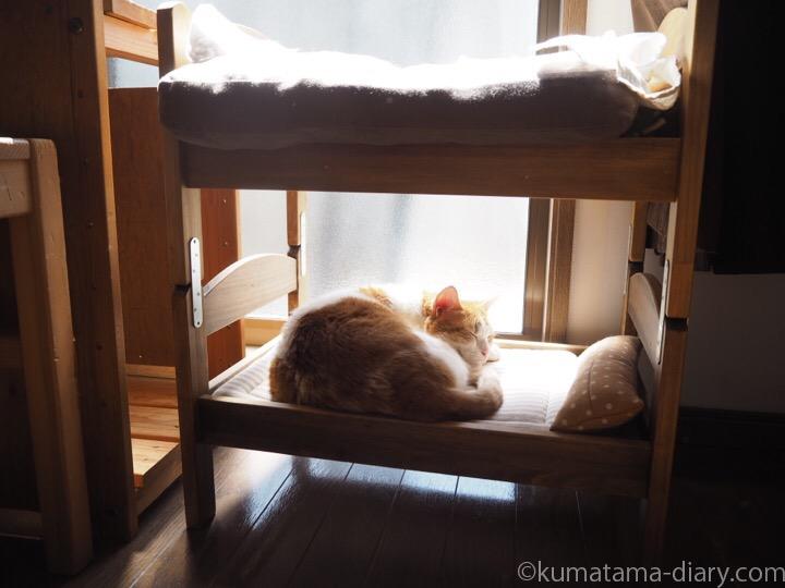 2段ベッドの下段で寝るたまき
