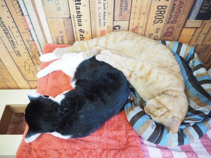 黒白猫さんと茶トラ猫さん