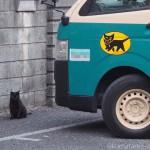 クロネコヤマトの車と黒猫さん