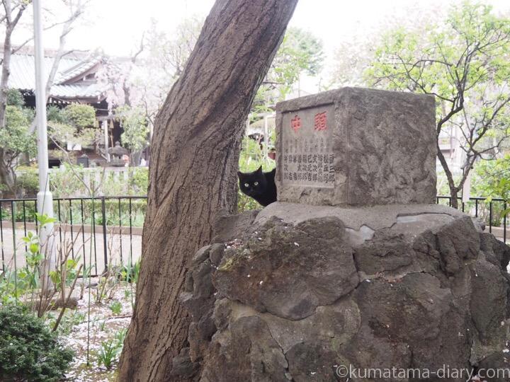 岩の上の黒猫さん