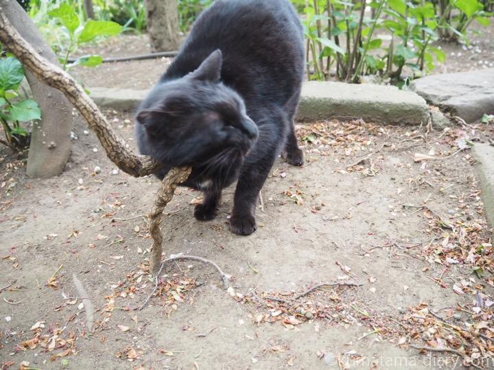 木に顔をこすりつける黒猫さん