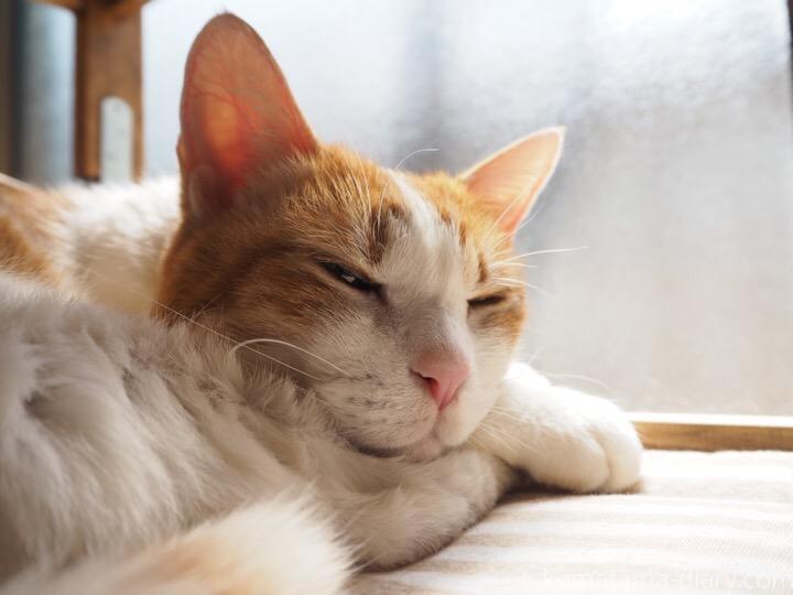 IKEA猫ベッドで寝るたまき