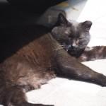 【湯島】車の下でひなたぼっこしていた三毛猫さんと黒猫さん