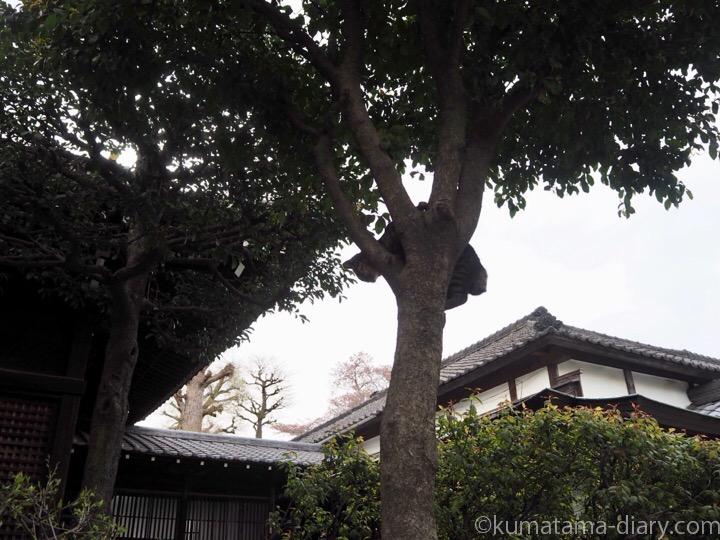 木に登ったキジトラ猫さん