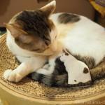祝・卒業!「ネコリパブリック東京お茶の水店」の猫さんがモデルの木彫り猫を持参しました