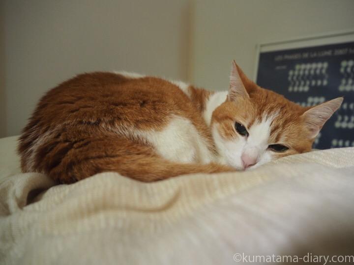 枕で寝るたまき