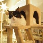 保護猫カフェ「東京キャットガーディアン 大塚シェルター」に行ってきました