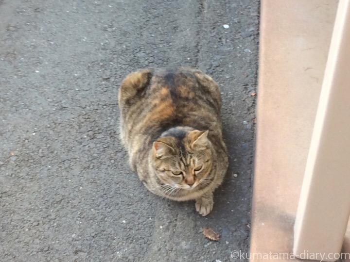 キジトラ猫名無しちゃん